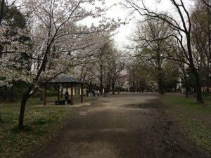 児童用の遊具など置いてある辺りから桜の樹が多くなってきます