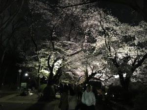 池北岸花見会場のライトアップ