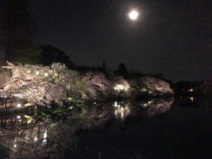 ライトアップされた桜が水に映ります