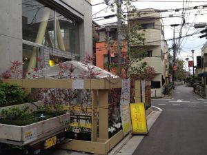 テラス席や建物周辺を彩る植物