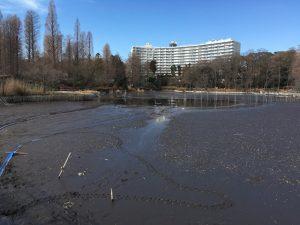 かいぼり時の井の頭池