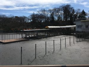 スワンボート達も、どこか別の池にでも飛び立ってしまったのでしょう…