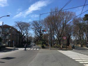 3月上旬の桜通りトラップ