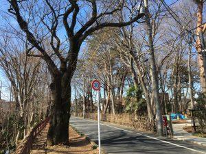 3月上旬、西久保公園を臨む