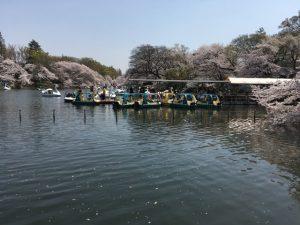 一番中途半端な存在の、普通の足漕ぎボートは不人気