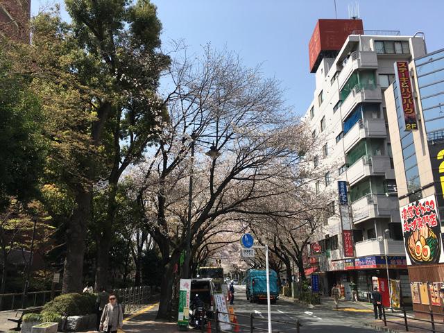 2018満開の桜@三鷹駅周辺〜桜通...