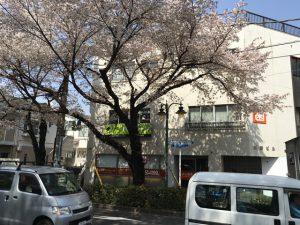 桜通りの標識