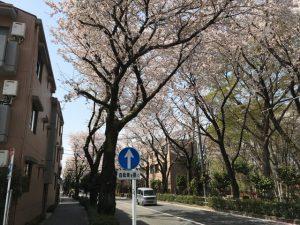 間違い選択肢を横目に。どこをどう見てもこれが桜通りである筈がない!