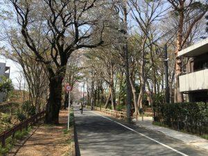 桜通りを入ってすぐの所に野鳥公園があります。