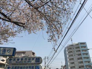ちなみに入口の桜は怪しく枝を垂れていました