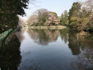桜は主役ではないものの池の渕に植えられています