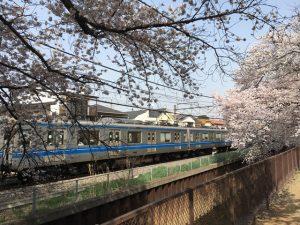 西武新宿線と桜