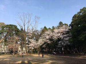 子供達の遊び場周囲にある桜の樹