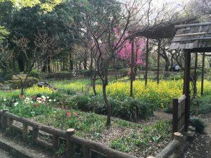池に下りる途中の花壇。春ですね。