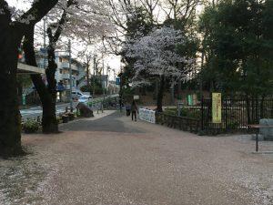 善福寺公園泣き別れの道の傍らにも桜が