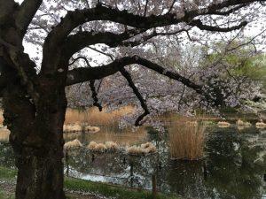 コンパクトな池なりの良さがあります