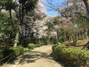梅ヶ丘駅側の入口入ってすぐの所の桜