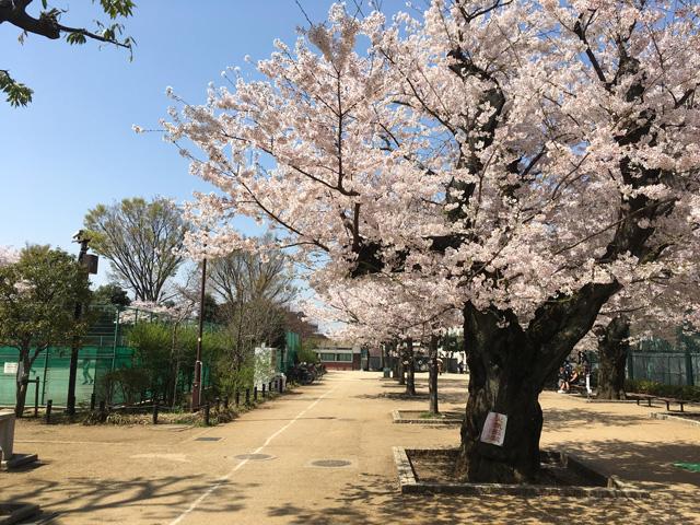 通り抜けるだけで春の訪れに心躍ります