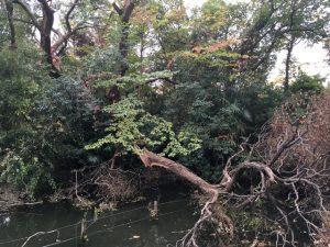 水面に落ちた枝