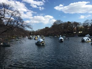 まだ寒々しい樹々の間をボートが進む