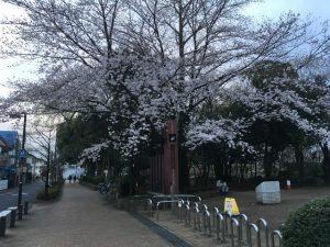 井草森公園入口から桜が出迎える
