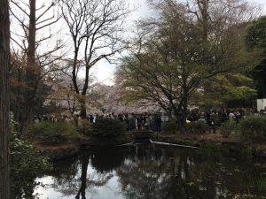 ひょうたん橋の桜もこの混み具合!