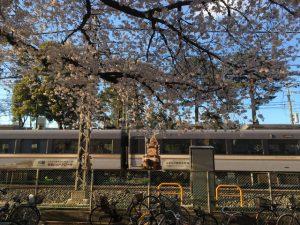 線路と桜の間には石神井川が流れています