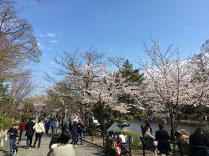 思い思いに桜を愉しむ方々