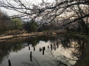 桜を愛でるため足を止めよう