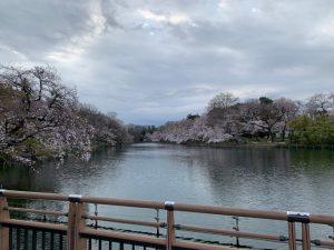 七井橋から、ボートの全くない池を