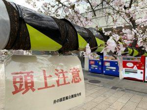 売店前の桜の枝