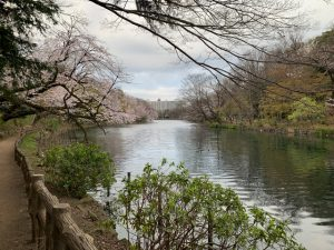 池を挟んで西側を眺めます