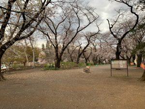 日毎開花していく桜を愉しめました