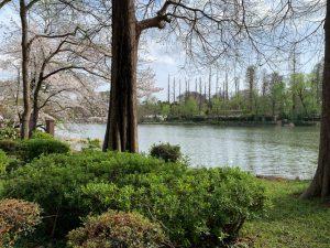 緑の眩しい公園です