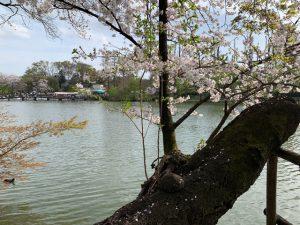 遠景に七井橋を見る