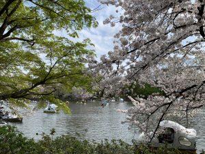アフターかいぼり時代の花見ボートの画です