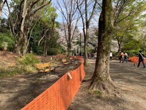 こちらは北側。それでも丘に座って花見している人達は少々居たのですが…