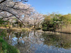 下の池のこの辺り、例年は宴会スポット