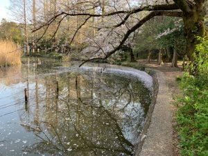 水に写る枝が力強い