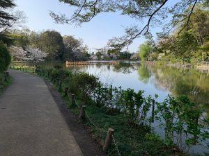 対岸からも出来る上の池の花見